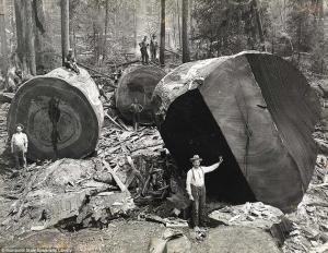 Redwoods and Lumberjacks